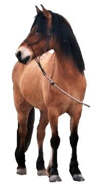 Koník :)